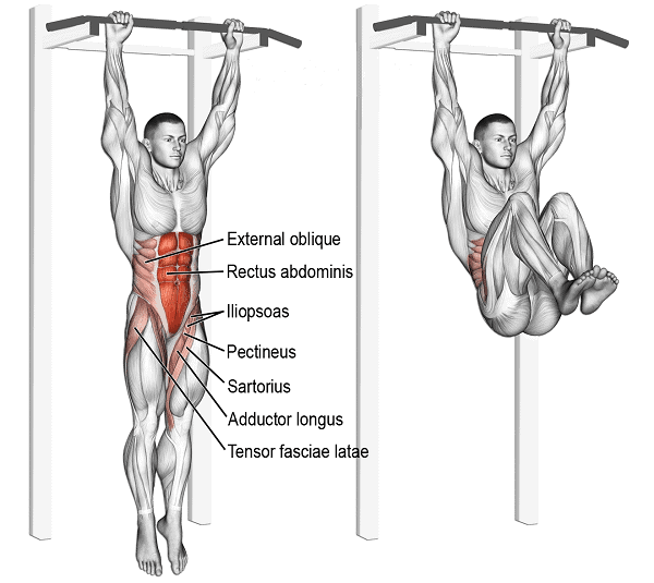 knee-pull-ups-muscles-worked